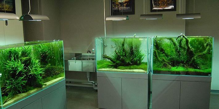 Unique aquarium design screenshot 5