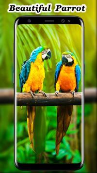 Cute Parrot Wallpaper screenshot 6