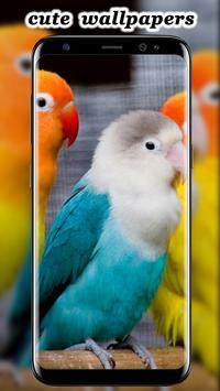 Cute Parrot Wallpaper screenshot 8