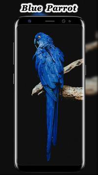 Cute Parrot Wallpaper screenshot 9