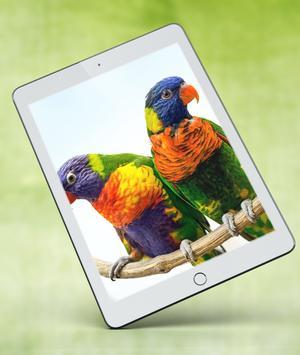 Cute Parrot Wallpaper screenshot 13