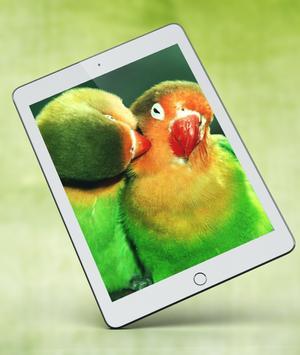 Cute Parrot Wallpaper screenshot 11