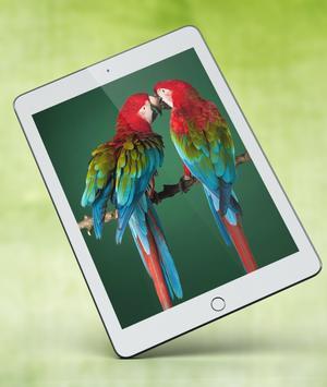 Cute Parrot Wallpaper screenshot 12