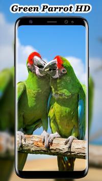 Cute Parrot Wallpaper screenshot 3