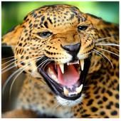 خطرناکترین حیوانات جهان icon