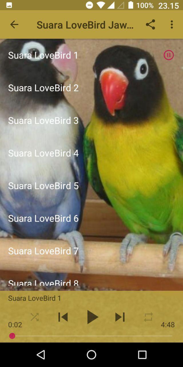 Suara Burung Lovebird Juara For Android Apk Download