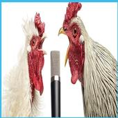 Chicken song(new, funny) icon