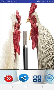 Chicken song(new, funny) poster