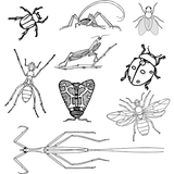 Genera of insect