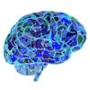 Hersenen-icoon