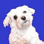 Shelter Dog Quiz - find a cute rescue dog! icon