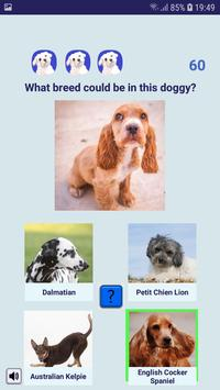 Shelter Dog Quiz - find a cute rescue dog! poster