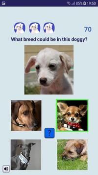 Shelter Dog Quiz - find a cute rescue dog! screenshot 2