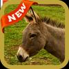 Donkey Wallpaper icon
