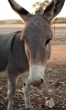 Donkey Wallpaper screenshot 4