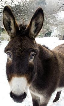 Donkey Wallpaper screenshot 5