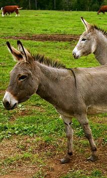 Donkey Wallpaper screenshot 6