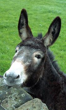 Donkey Wallpaper screenshot 1