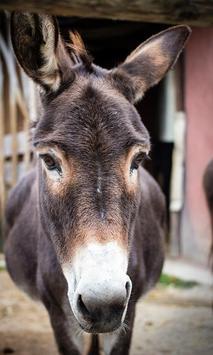 Donkey Wallpaper screenshot 2