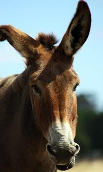 Donkey Wallpaper screenshot 3