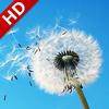 바람 소음: 휴식과 수 면 아이콘