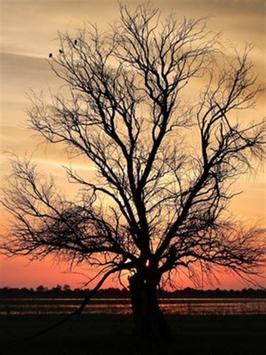 Dry Tree Wallpaper screenshot 2