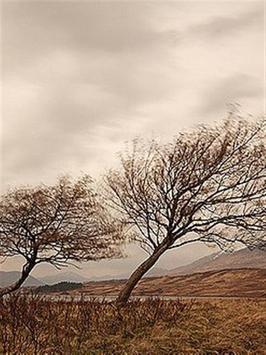 Dry Tree Wallpaper screenshot 7