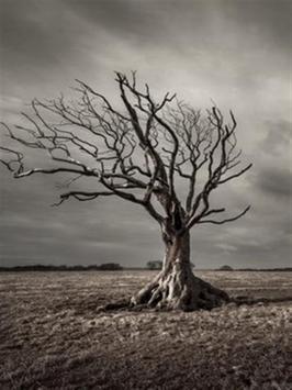 Dry Tree Wallpaper screenshot 4