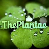 The Plantae icono