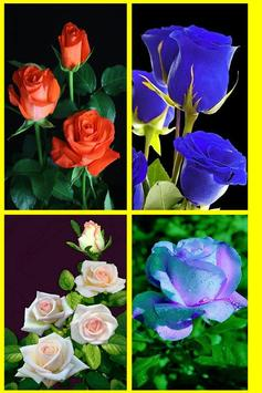 Rosas y Flores de Colores para Enamorar screenshot 10