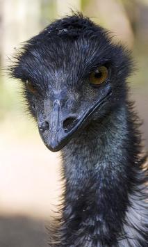 Emu Wallpaper screenshot 4