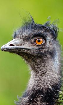 Emu Wallpaper screenshot 5