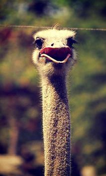 Emu Wallpaper screenshot 6
