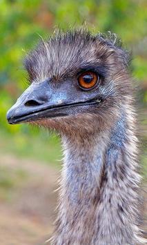 Emu Wallpaper screenshot 1