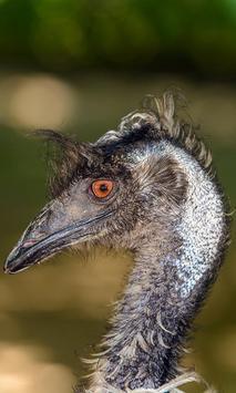 Emu Wallpaper screenshot 2