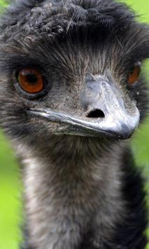 Emu Wallpaper screenshot 3