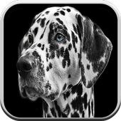 Dog Games For Kids Free 🐶: Puppy Game Boys & Girl icon