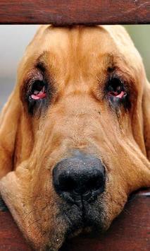 Bloodhounds Wallpapers screenshot 1