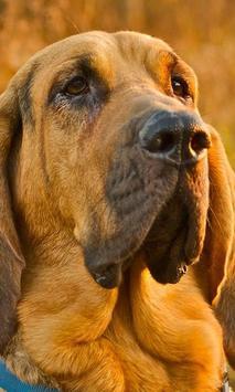 Bloodhounds Wallpapers screenshot 2