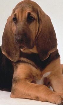 Bloodhounds Wallpapers screenshot 3