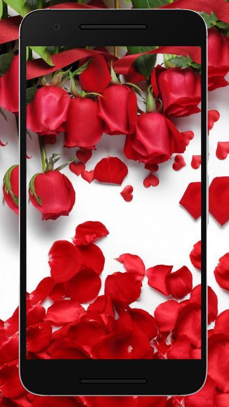 Gambar Wallpaper Bunga Ros Gambar Bunga