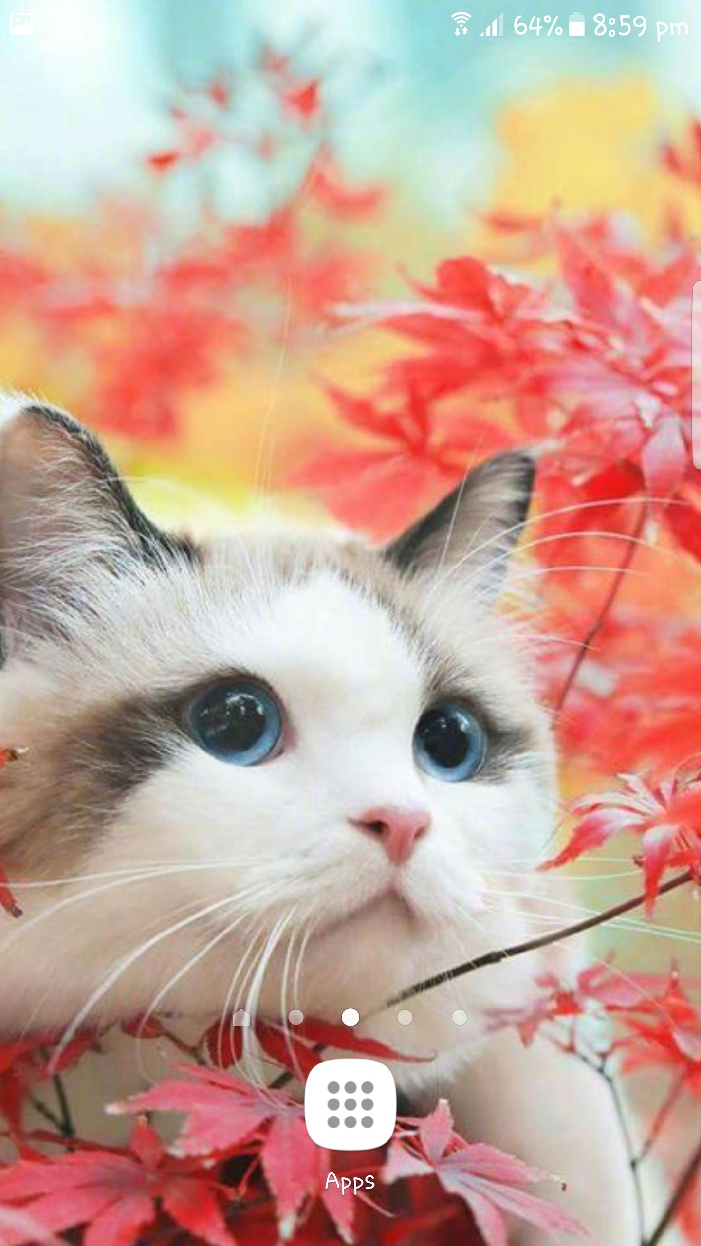 Best Cat Wallpapers Kitty Kitten Cute Wallpapers For Android Apk Download