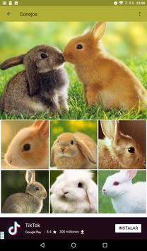 Conejos fondos de pantalla y wallpaper HD screenshot 6