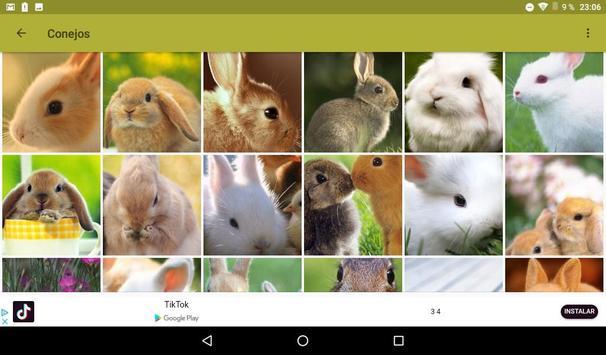 Conejos fondos de pantalla y wallpaper HD screenshot 7