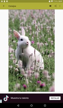 Conejos fondos de pantalla y wallpaper HD screenshot 8