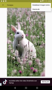 Conejos fondos de pantalla y wallpaper HD screenshot 9