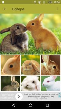 Conejos fondos de pantalla y wallpaper HD poster
