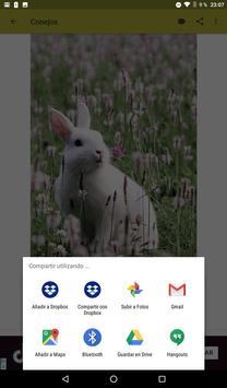 Conejos fondos de pantalla y wallpaper HD screenshot 10