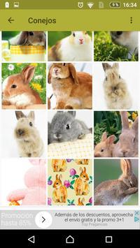 Conejos fondos de pantalla y wallpaper HD screenshot 1