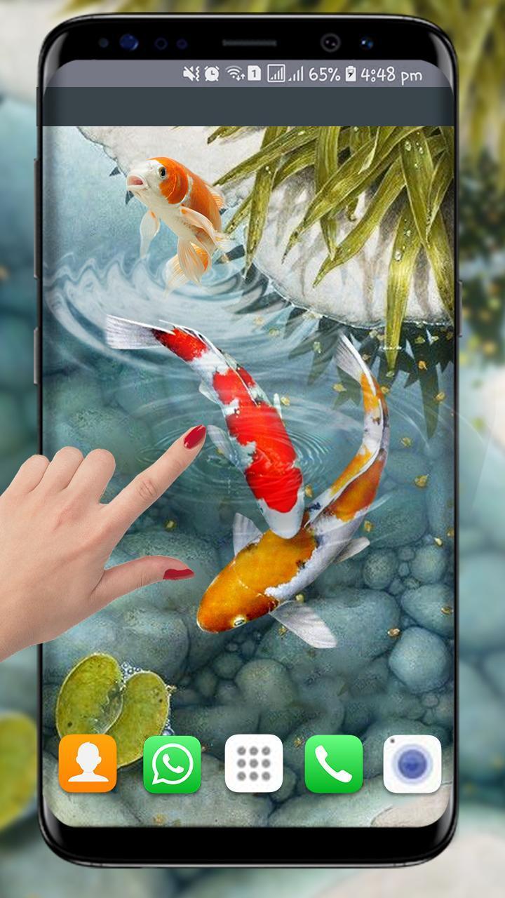 Ikan Koi Wallpaper Hidup Wallpaper Ikan Baru 3d For Android